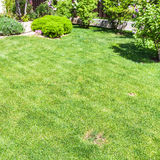 Manicured lawn with decorative bushes on backyard Stock Images