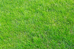 Manicured lawn Royalty Free Stock Photos