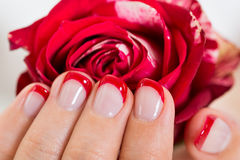 Manicured Nail With Nail Varnish Holding Rose Royalty Free Stock Images