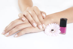 Manicured nails with nail polish Royalty Free Stock Photography