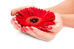 Manicured nails Stock Photography