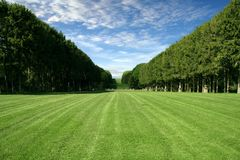 Manicured Rasen - großes grünes Feld Stockbild