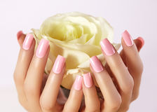 Manicured spikar med rosa färger spikar polermedel Manikyr med nailpolish Modekonstmanikyr, stelnar färg Akryl spikar salongen Arkivbilder