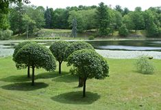 Manicured Trees. On landscaped property Royalty Free Stock Image