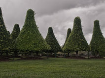 Manicured trees Royalty Free Stock Image