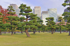 Manicured Trees, Tokyo, Japan Royalty Free Stock Photos