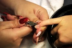 Manicurist at training courses shows students how to handle nails with the help of nippers cuticles before applying Royalty Free Stock Image