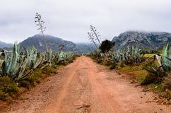Manier aan bergen tussen agaves Royalty-vrije Stock Fotografie
