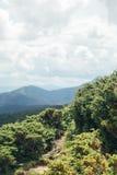 Manier aan de bergen door groene struiken Stock Foto's