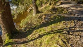 Manier aan meerkant door bos royalty-vrije stock afbeeldingen