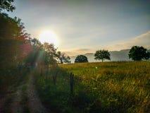 Manier door een gebiedshoogtepunt van gele gras en bomen in mornin royalty-vrije stock fotografie