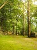 Manier in groen gras van de grond Royalty-vrije Stock Afbeeldingen
