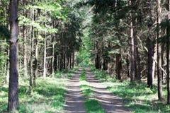 Manier in het Nationale Park van Bialowieza in Polen Royalty-vrije Stock Afbeeldingen