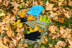 Manier onder de herfstbladeren Stock Foto's