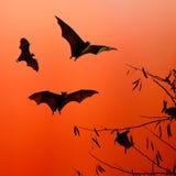 Maniez la batte les silhouettes volant sur le fond d'isolat - festiva de Halloween Image stock