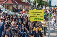 Manifest mot ovettig skogsavverkning royaltyfria foton