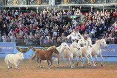 Manifestazione del cavallo Fotografia Stock Libera da Diritti