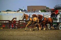 Manifestazione del cavallo da tiro Fotografia Stock Libera da Diritti