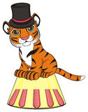 Manifestazione del circo con la tigre Immagine Stock