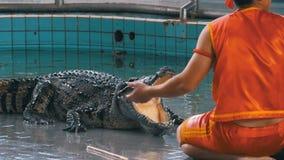 Manifestazione del coccodrillo all'azienda agricola famosa del coccodrillo di Pattaya thailand Uomo nella gabbia con i coccodrill archivi video