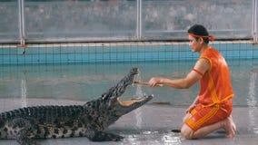 Manifestazione del coccodrillo all'azienda agricola famosa del coccodrillo di Pattaya thailand Uomo nella gabbia con i coccodrill video d archivio