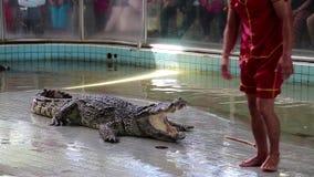 Manifestazione del coccodrillo a Pattaya, Tailandia stock footage