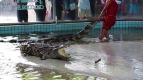 Manifestazione del coccodrillo a Pattaya, Tailandia video d archivio