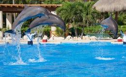 Manifestazione del delfino a Dolphinaris fotografia stock