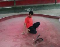 Manifestazione del serpente Immagini Stock Libere da Diritti