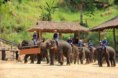 Manifestazione dell'elefante in Chiangmai, Tailandia aprile Fotografia Stock Libera da Diritti