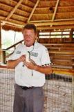Manifestazione della fauna selvatica dei terreni paludosi di Florida del parco dell'alligatore Immagini Stock Libere da Diritti