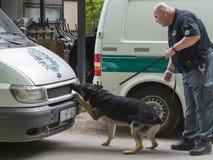 Manifestazione di cane da fiuto Fotografie Stock Libere da Diritti