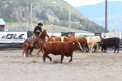 Manifestazione di taglio del cavallo Fotografie Stock Libere da Diritti