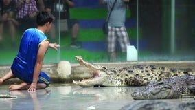 Manifestazione quotidiana del coccodrillo sulla sedia a Sriracha Tiger Zoo, Tailandia archivi video