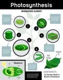 Manifesto biologico di Infographic di fotosintesi illustrazione vettoriale