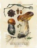 Manifesto botanico d'annata stampa floreale di arte dell'acquerello disegnato a mano con i funghi illustrazione di stock