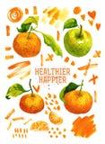 Manifesto con i mandarini, mela verde dell'acquerello Immagine Stock