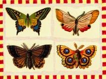Manifesto dell'annata: farfalle Fotografia Stock