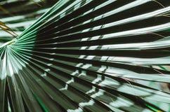 Manifesto della natura Filiale verde della palma closeup Vibrazioni tropicali fotografie stock
