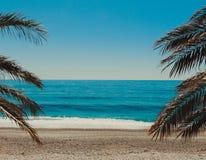Manifesto della palma e della spiaggia fotografie stock libere da diritti