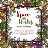 Manifesto di schizzo di vettore delle spezie e delle erbe Immagine Stock