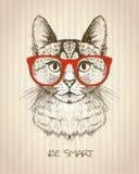 Manifesto grafico d'annata con il gatto dei pantaloni a vita bassa con i vetri rossi Fotografie Stock