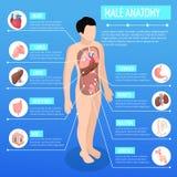 Manifesto isometrico di anatomia maschio illustrazione di stock