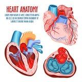 Manifesto medico e di anatomia della struttura, del cuore illustrazione di stock