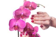 Manikürte dunkle rosa Blumenpedale der Nagelliebkosung Stockbilder