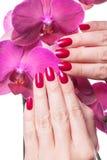 Manikürte dunkle rosa Blumenpedale der Nagelliebkosung Stockfoto