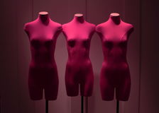 Manikin Stock Images