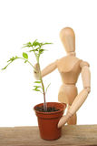 Manikin and tomato plant Royalty Free Stock Images