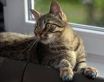 Manikyr för katter royaltyfri bild