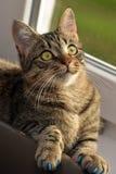 Manikyr för katter royaltyfria foton